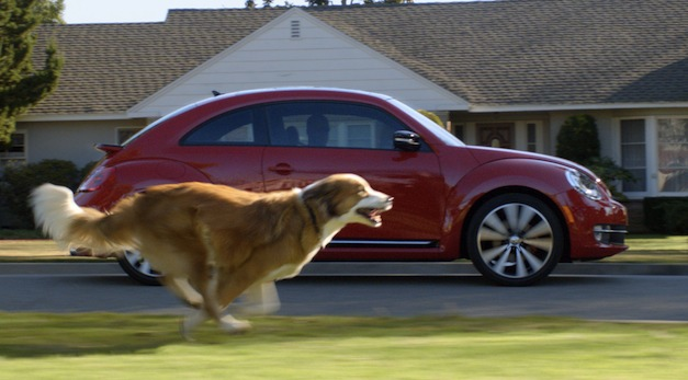 The Dogs Strikes Back Volkswagen Beetle