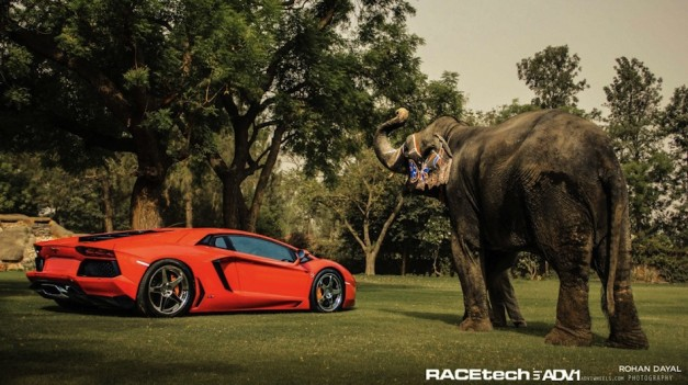 Lamborghini Aventador puts on ADV.1 shoes, stands next to elephant
