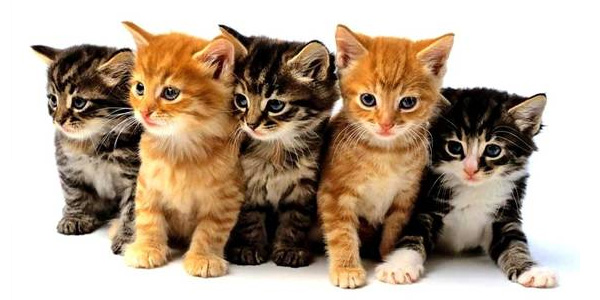 Offbeat: Man crashes after being distracted by…a litter of kittens?
